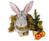 Conejo gris y decoraciones de la navidad — Foto de Stock