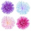 Aster flowers set - Stock Photo