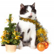 Kitten and christmas decorations — Foto Stock