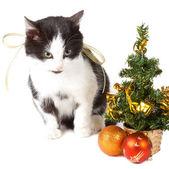 Decorazioni di natale e il gatto — Foto Stock
