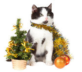 Kitten and christmas decorations — Стоковое фото