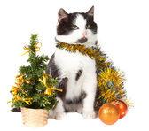 Gattino e natale decorazioni — Foto Stock