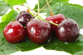 Sweet cherries with leaves — Stock Photo