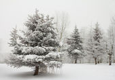 Winter landscape panorama — Stock Photo