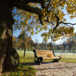 Bench in autumn park - Stock Photo