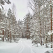 Stock Photo: Road in winter forest