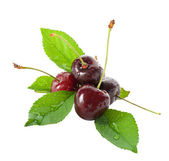 Wet ripe cherries with leaves — Stock Photo