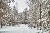 Road in winter forest — Stok fotoğraf
