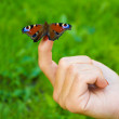 Butterfly sitting on finger — Stock Photo