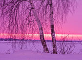 Two birch on sunset — Stock Photo