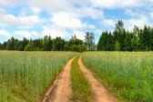 Country road through rye fieldcountry road through rye field — Stock Photo