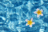 Bloemen in water — Stockfoto