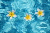 Flower in blue water — Stock Photo