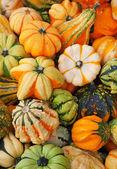Colorful pumpkins — Stock fotografie