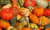 Colorful pumpkins — Stock Photo