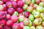 Sfondo rosso mela matura — Foto Stock