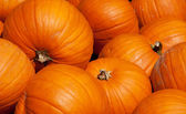 Colorful pumpkins — Stockfoto