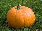 Orange pumpkin on the grass — Stock Photo