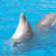 Stock Photo: Pair of bottlenose dolphins