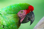 Green Parrot — Stock Photo