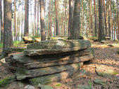 Pine forest and stones — Stock Photo