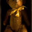 Teddy — Stockfoto #4254369