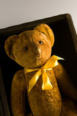 A Teddy — Stock Photo