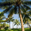 Tropical landscape — Stock Photo #4593176