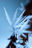 Ice crystal — Stock Photo