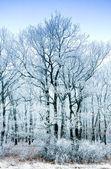 冷冻的森林 — 图库照片