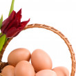 Eggs and red tulip — Stock Photo