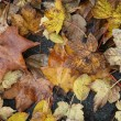 Autumn leaves — Stock Photo #4556011