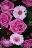 Flores rosadas mojadas — Foto de Stock