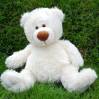 White teddy-bear — Stock Photo