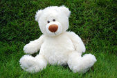White teddy-bear — 图库照片