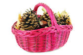 Basket with chestnut and pine-cone — Stock Photo