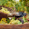 Vineyard with red and white wine — Stockfoto