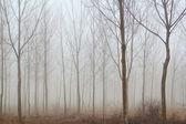 Kış orman sis — Stok fotoğraf