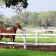 Farm scene with horses in coral — Stock Photo #5111302