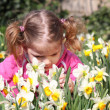 Little girl smell flower — Stock Photo