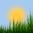 Sunrise & grass — Stockfoto