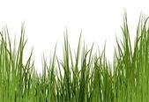 Uncut grass background — Stock Photo