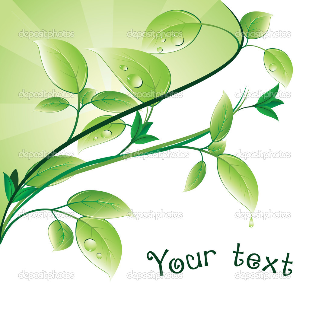 Green branch with beautiful leaves and drops.  — Stock Vector #4516300