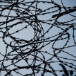 Barb wire - Stock Photo