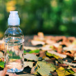 Bottle of water in the autumn motif — Stock Photo