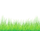 Background with the grass and drops — Stock Vector