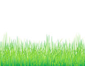 Background with the grass — Stock Vector