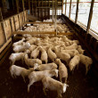 Stock Photo: Shearing Shed