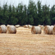 Round Bales of Hay - Stock Photo