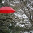 ������, ������: Red Umbrella